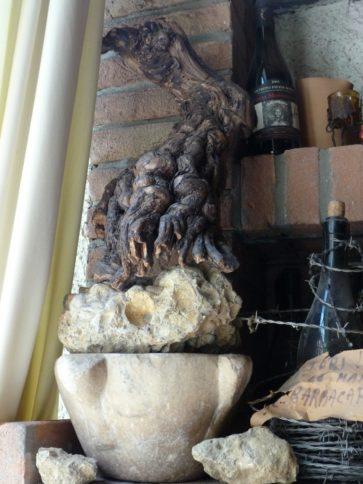 Alte Wurzel der Ughetta-Rebe aus dem Oltrepo Pavese. Foto: Gabriella Grassullo und Ezio Gallesi