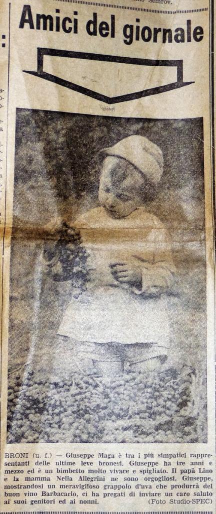 Giuseppe Maga mit 3,5 Jahren in der Presse mit seinem frühen Interesse für den Weinbau, der Stolz seines Vater Lino Maga und seiner Mutter Nella Allegrini.. Foto: Gabriella Grassullo und Ezio Gallesi