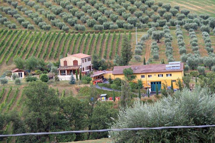Wein und Oliven, das ist das Leben von Otto Carlo Frueh auf seinem Weingut La Maddalena. Foto: Otto Carlo Frueh