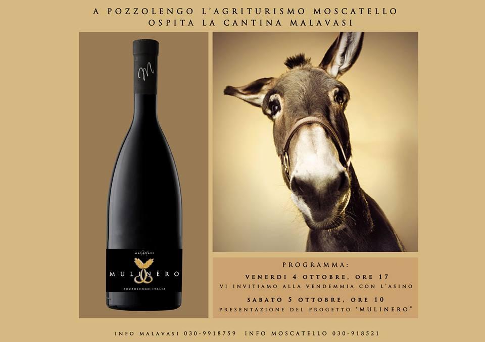 Wein oder Eseltherapie zum Relaxen? Bei Malavasi kommt beides zusammen bei der Weinlese mit Eseln. Man sieht die Flasche Wein des Mulinero und einen Eselskopf.