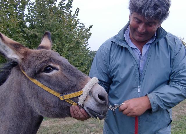 Am Ende gibt es noch Streicheleinheiten, die für beide, Mensch und Tier, wichtig sind. (Foto: Katrin Walter - simply walter) Auf dem foto sieht man Daniele Malavasi einem Esel den Kopf liebkosen.