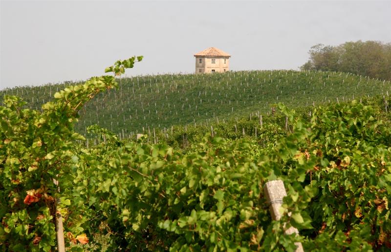 """Die Rebanlagen von Montelio im Oltrepò Pavese vwerden vom sogenannten """"Café House"""" dominiert, das direkt auf der Hügelkuppe steht"""