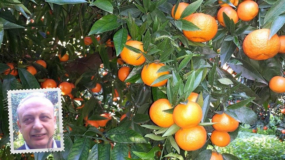Gesunde und schmackhafte kalabrische Clementinen, dafür verbürgt sich Aldo Salatino höchstpersönlich.