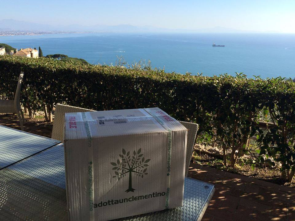 """Eine Kiste der Clementinen mit dem Logo von """"adotta un clementino"""" auf der Anhöhe, auf der die Clementinen geerntet werden mit einem spektakulären Blick auf das Ionische Meer."""