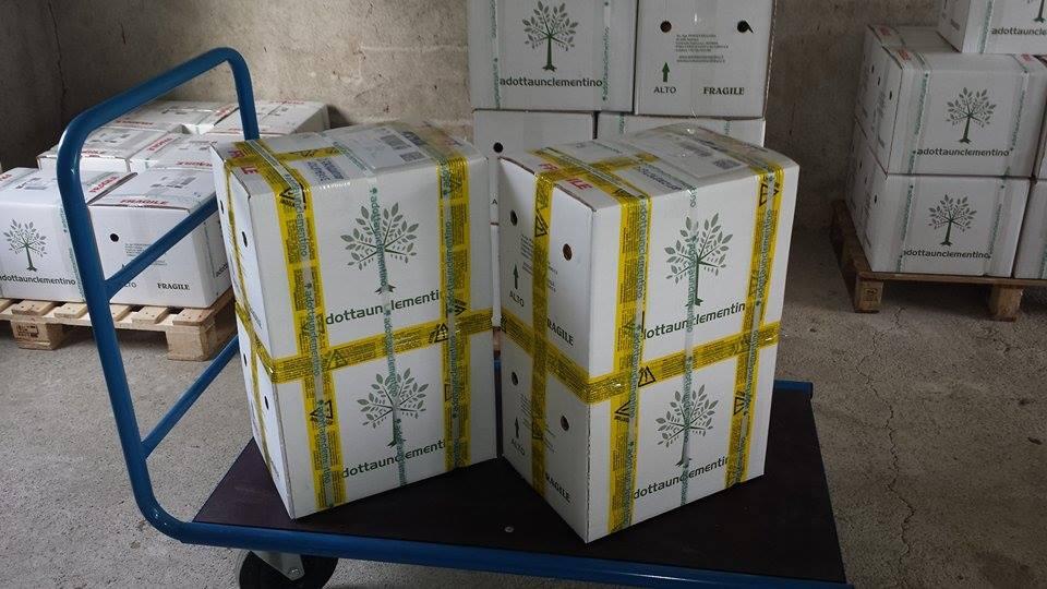 60 kg Clementinen verpackt in 4 Kartons, die zu je 2 Kartons zusammengeklebt wurden, damit es weniger Porto kostet.