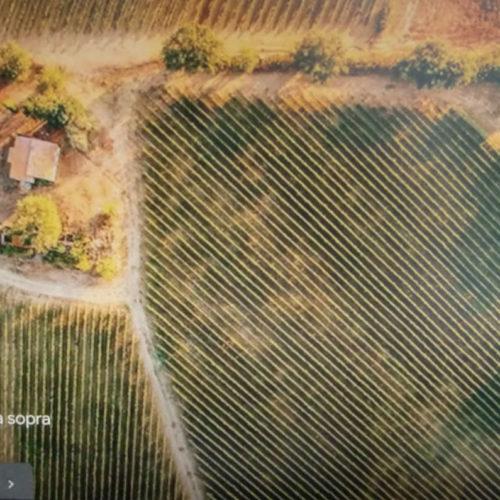 Draufsicht auf das Weingut SERPAIA DI ENDRIZZI, Podere Maremmello in Fonteblanda (Orbetello - Grosseto) Italien