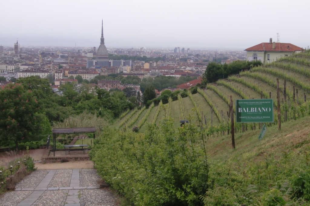 Vigna Villa della Regina ist der Weinberg der Stadt Turin, der von der Kellerei Balbiano angelegt wurde und bewirtschaftet wird. Foto Katrin Walter - simply walter