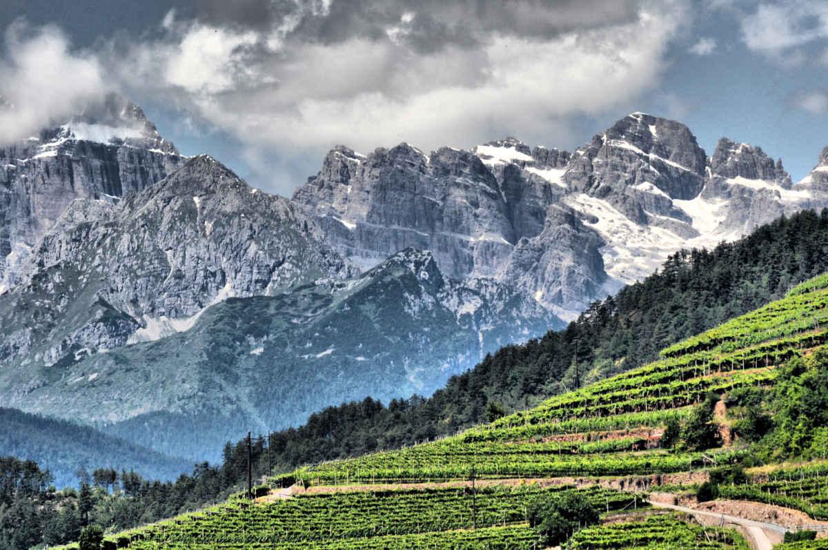 Cembratal mit Rebanlagen und den Bergen im Sommer. Foto: Luciano Lona für simply walter