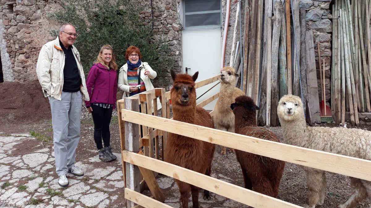 Silpaca, Alpaka-Trekking im Cembratal mit Ilaria Baldo und vier ihrer Alpakas