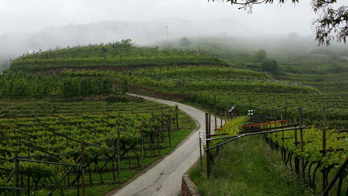Rebanlagen in Lisignago im Cembratal im Nebel: Zauberhaft. Foto: Katrin Walter - simply walter