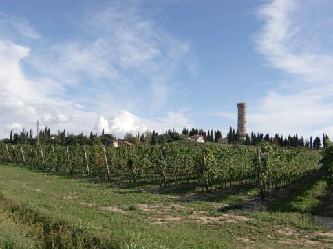 Rebflàche mit dem Turm von San Martino della Battaglia im Hintergrund. Foto: Katrin Walter simplywalter.biz