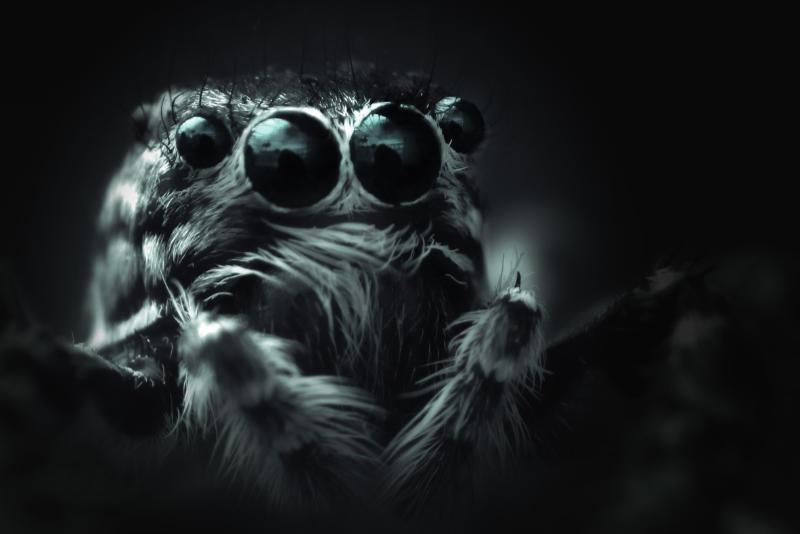 Auf dem Bild eine fette Spinne in s/w. Auch im Netz kannst du fette Beute machen, wenn das Webdesign und der Content zum Image passt. Katrin Walter - simply walter